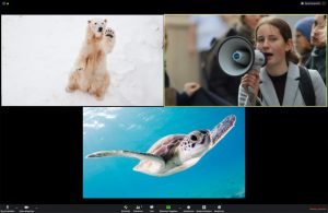Eine Videokonferenz mit einem Eisbär, einer Schildkröte und einer Frau mit Megaphon.