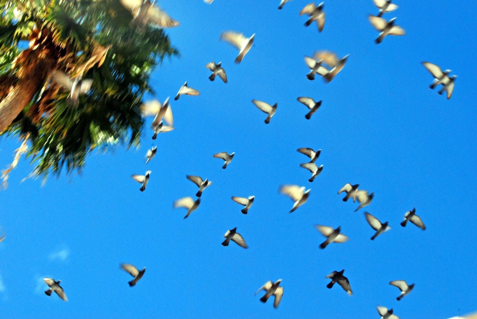 Viele Tauben die neben einer Palme davonfliegen.
